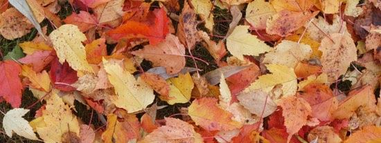 canva-fallen-leaves,-autumn,cropped